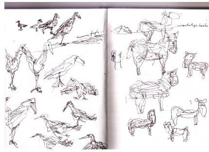 fugle og køer
